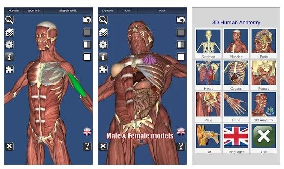 3D Bones and Organs