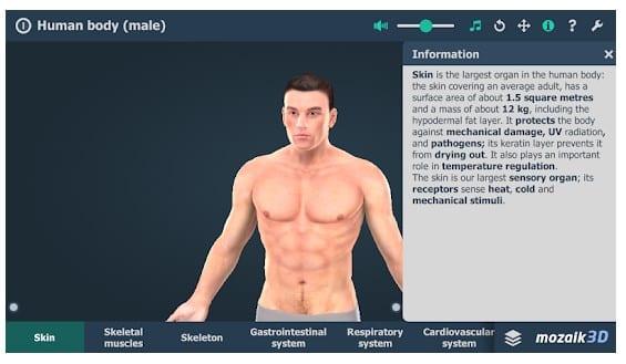 Human Body (Male) Educational VR 3D 1